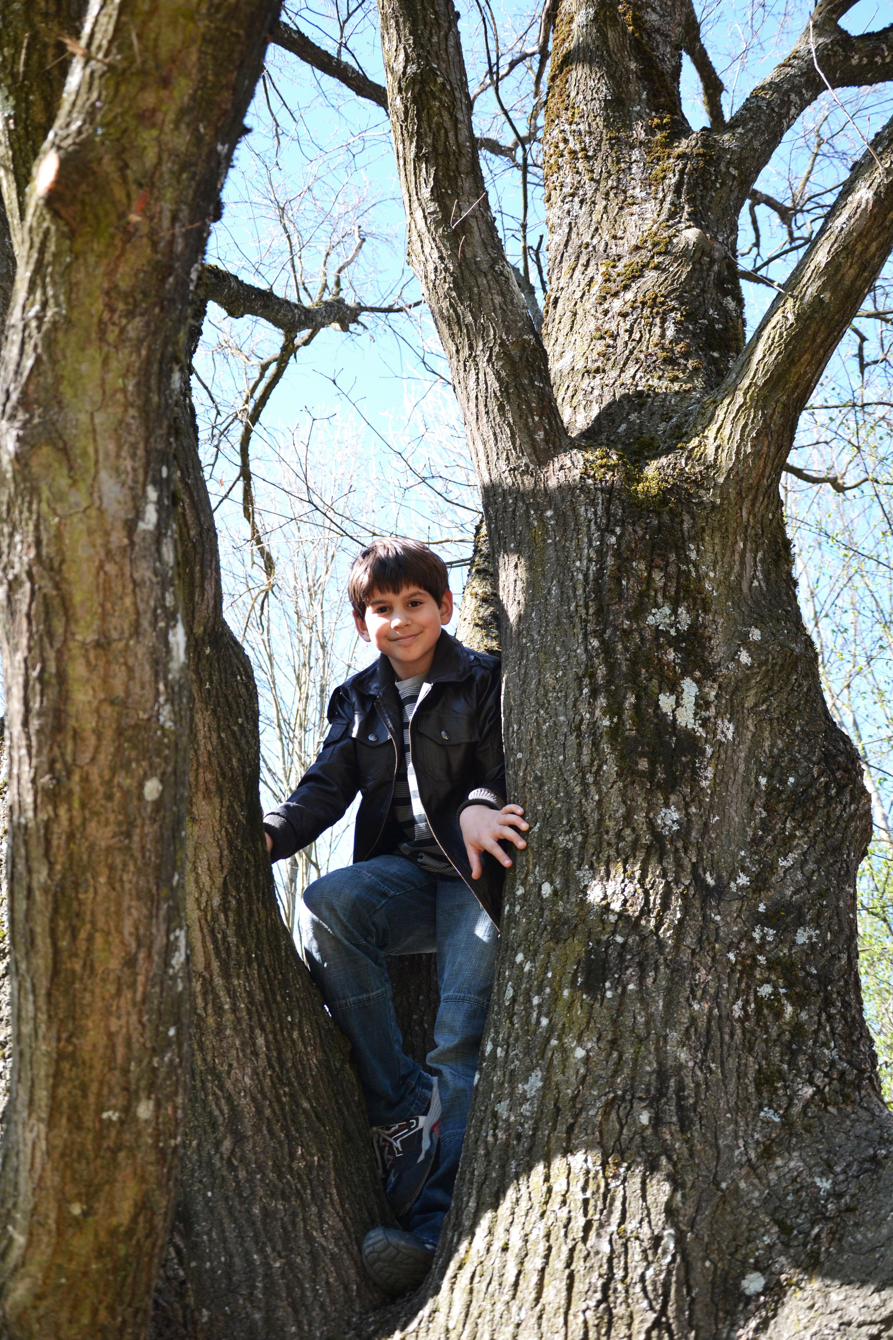 grimper aux arbres