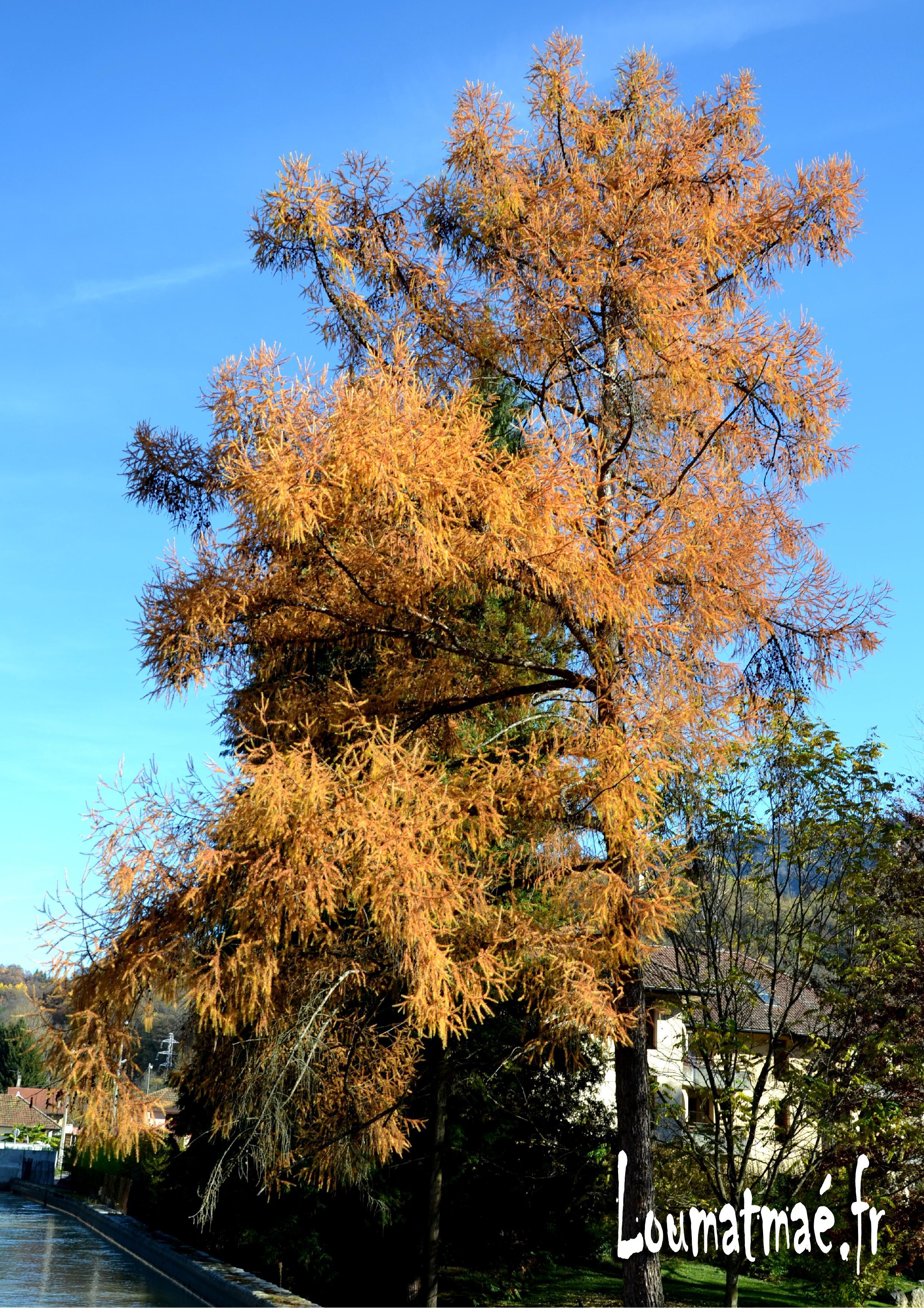automne au parc st Exupéry